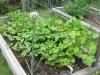 Butter Beans, Black-Eyed-Peas, Cucumbers