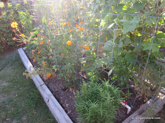 herbs, flowers, peppers, tomato, cucumber